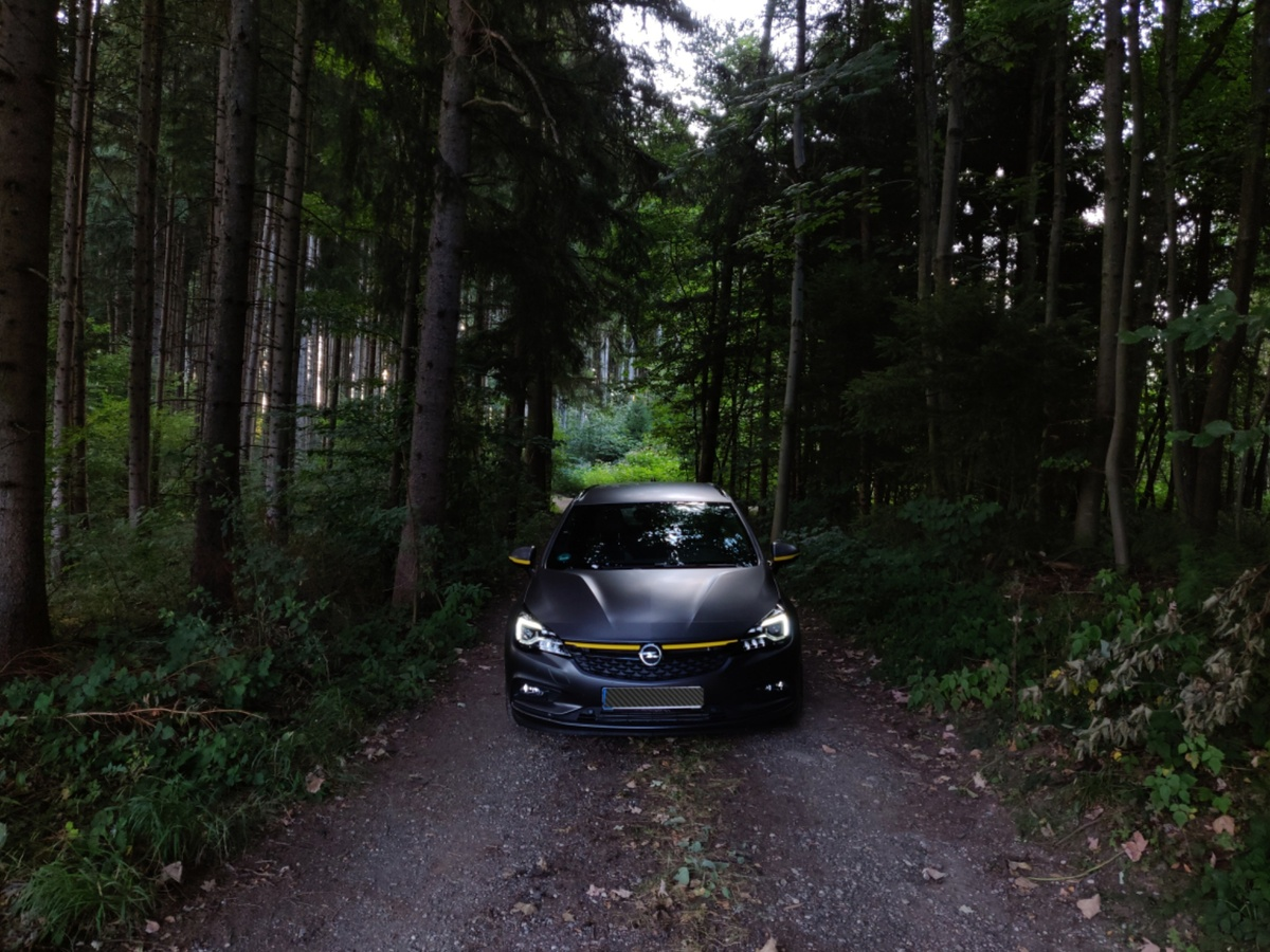 Halbtief im Wald
